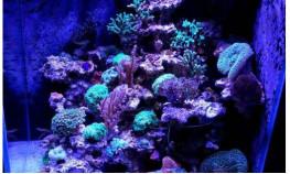 Морской аквариум на керамике..