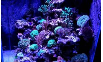Морской аквариум на керамике