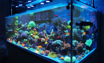 Anapa reef